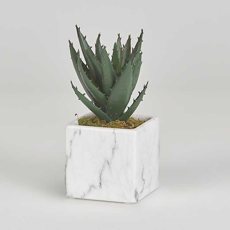 Mini Aloe Plant In White Marble Ceramic Cube Kirklands