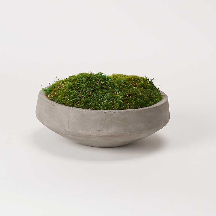 Preserved Mood Moss In Round Cement Bowl Kirklands